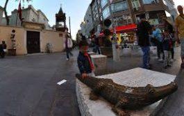 Kadıköy'de timsah'lar yaşadı mı ?