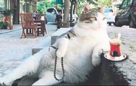 Kadıköy'ün ünlü kedisi Tombili