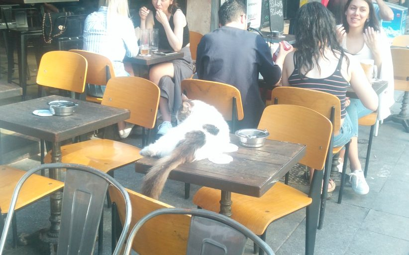 Moda Caddesi'nde bir kedinin cafe keyfi