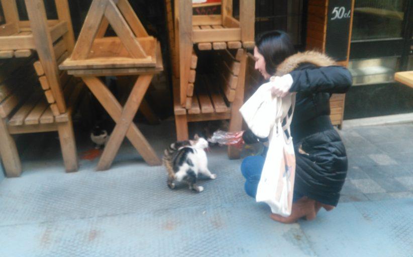Kadıköy Tarihi Çarşı'da, bir hayvansever Amerikalı