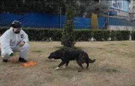 İçişleri Bakanlığı'ndan sokak hayvanlarının yaşam alanlarında tespit edilen noktalara düzenli mama, yem, yiyecek ve su bırakılması genelgesi