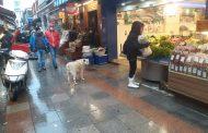 Kadıköy Tarihi Çarşı' da esnafın hayvan sevgisi